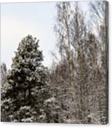 Snowy Forest Edge Canvas Print