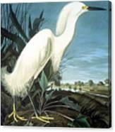 Snowy Heron Canvas Print