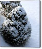 Snowy Morn Canvas Print