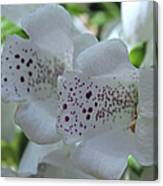 Snowy Mountain Digitalis Canvas Print