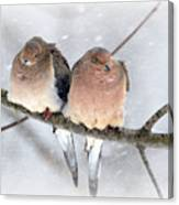 Snowy Mourning Dove Pair Canvas Print