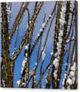 Snowy Ocotillo Sky Canvas Print