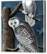 Snowy Owl Audubon Birds Of America 1st Edition 1840 Royal Octavo Plate 28 Canvas Print