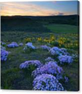 Snowy Phlox Sunset Canvas Print