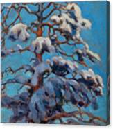 Snowy Pine-tree Canvas Print