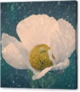 Snowy Poppy Canvas Print