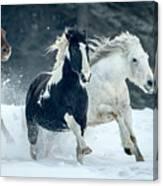 Snowy Run Canvas Print