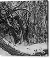Snowy Tree Bench In Black And White Canvas Print