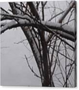 Snowy Tree II Canvas Print
