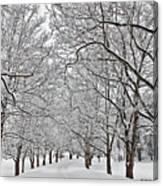 Snowy Treeline Canvas Print