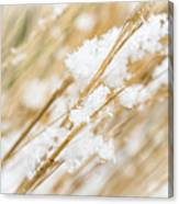 Snowy Weed Canvas Print
