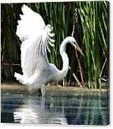 Snowy White Egret In The Wetlands Canvas Print