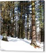 Snowy Wilderness Canvas Print