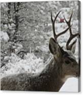 Snowy Young Buck Canvas Print