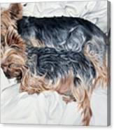 Snuggling Yorkies Canvas Print
