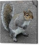 So.... Got Nuts? Canvas Print