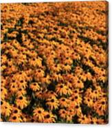 So Many Flowers To Pick From........ Canvas Print