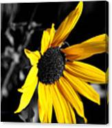 Soaking Up The Yellow Sunshine Canvas Print