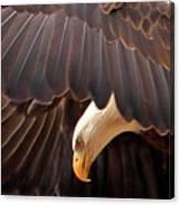 Soar Like An Eagle Canvas Print