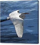 Soaring Egret Canvas Print