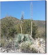 Socal Yucca Canvas Print