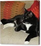 Socks The Cat King Canvas Print