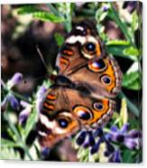 Soft Butterfly Canvas Print