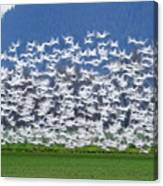 Soft Frock L525 Canvas Print