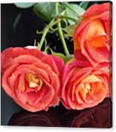 Soft Full Blown Red-orange Roses On Black Background. Canvas Print