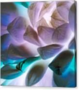 Soft Glow Succulents Canvas Print