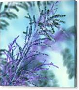 Soft Grasses Canvas Print