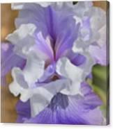 Soft Iris Canvas Print
