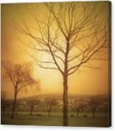 Soft Light In Summerland Canvas Print