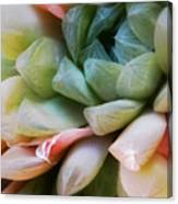 Soft Natural Succulents Canvas Print