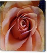 Soft Peach Rose Canvas Print