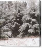Soft Snow Canvas Print