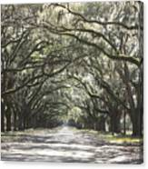 Soft Southern Day Canvas Print