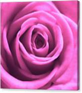 Soft Touch Pink Rose Canvas Print