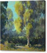 Softly Lit Afternoon Canvas Print
