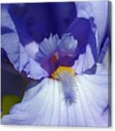 Softly Purple Canvas Print