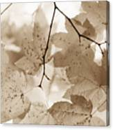 Softness Of Brown Maple Leaves Canvas Print