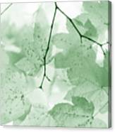 Softness Of Green Leaves Canvas Print