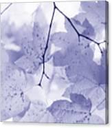 Softness Of Lavender Leaves Canvas Print