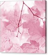 Softness Of Pink Leaves Canvas Print