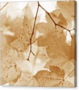 Softness Of Rusty Brown Leaves Canvas Print