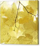 Softness Of Yellow Leaves Canvas Print