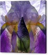 Solace Canvas Print