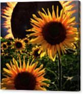 Solar Corona Over The Sunflowers Canvas Print