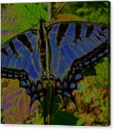 Solarized Butterfly Canvas Print