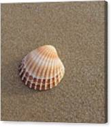Solitary Cockle Shell Canvas Print